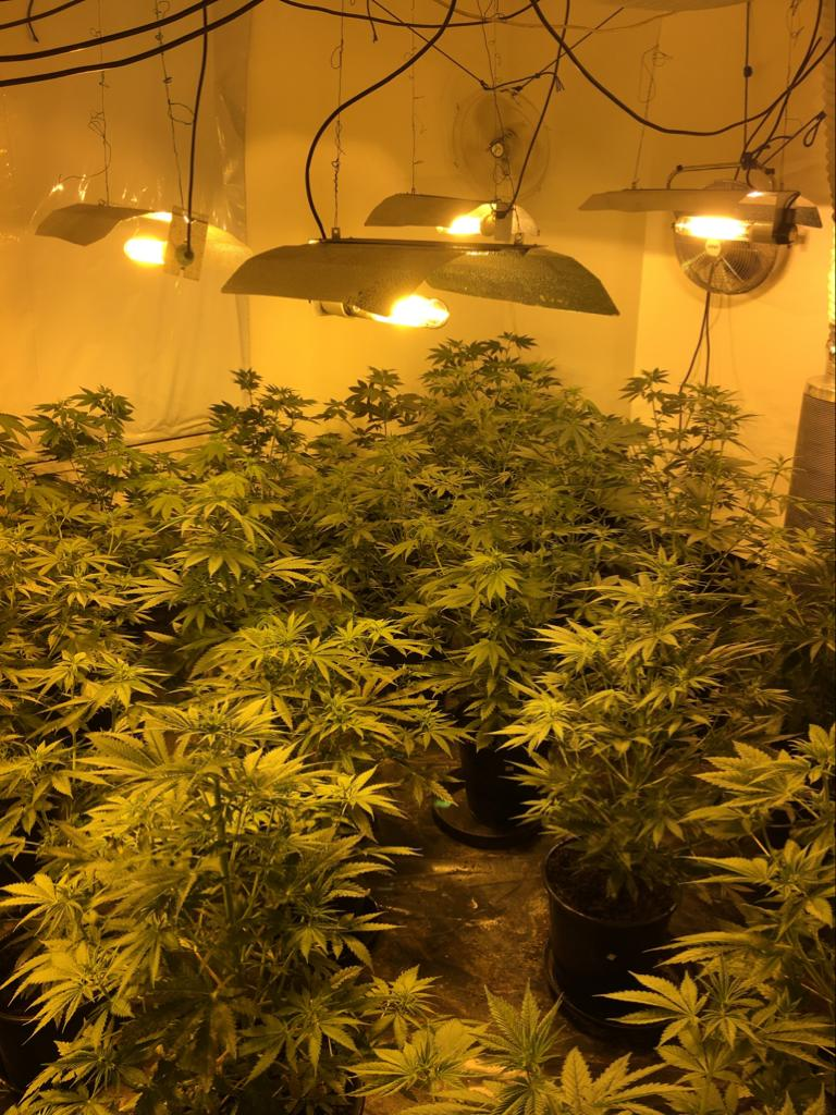 cannabis_factory_lowestoft_1.jpg