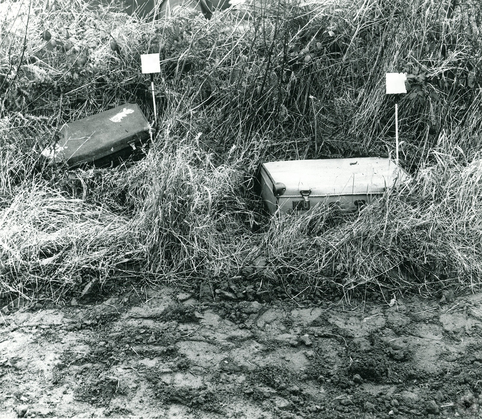 Suitcases in field